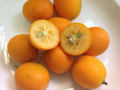 kumquat-4